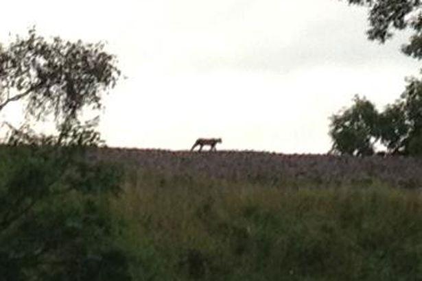 """Ist das das """"Beast of Cumbria""""?"""